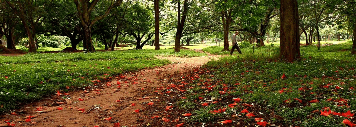cubbon-park-things-to-do-in-bangalore-justa-indiranagar